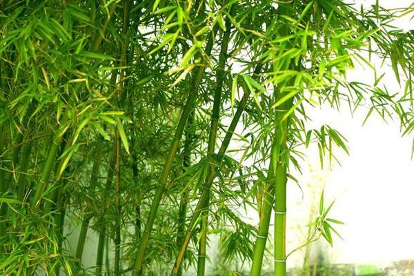 chat-lieu-vai-bamboo-mot-xu-huong-chat-lieu-vai-may-hien-dai-than-thien-01