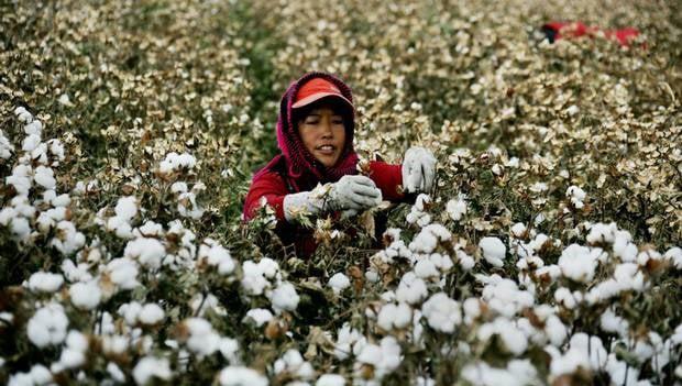 vai-cotton-la-gi-nhung-thong-tin-thu-vi-ve-chat-lieu-pho-bien-nay-01